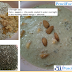 Oats recipes for breakfast - in Pakistan