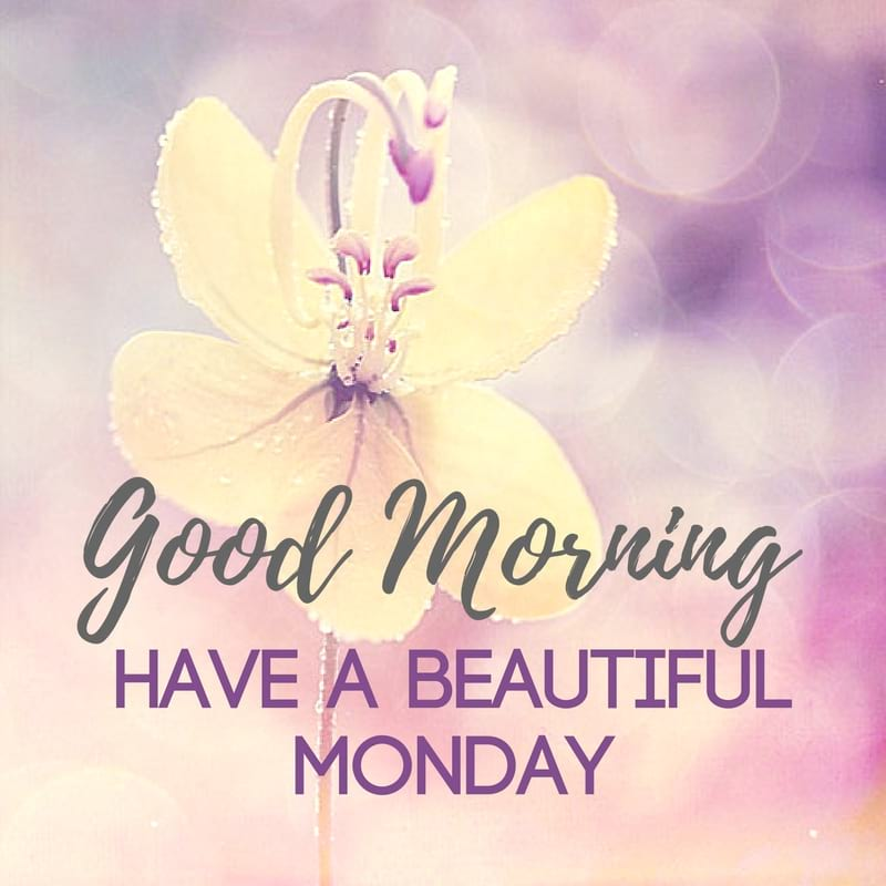 Happy Monday Good Morning Flowers Blessings and Wishes