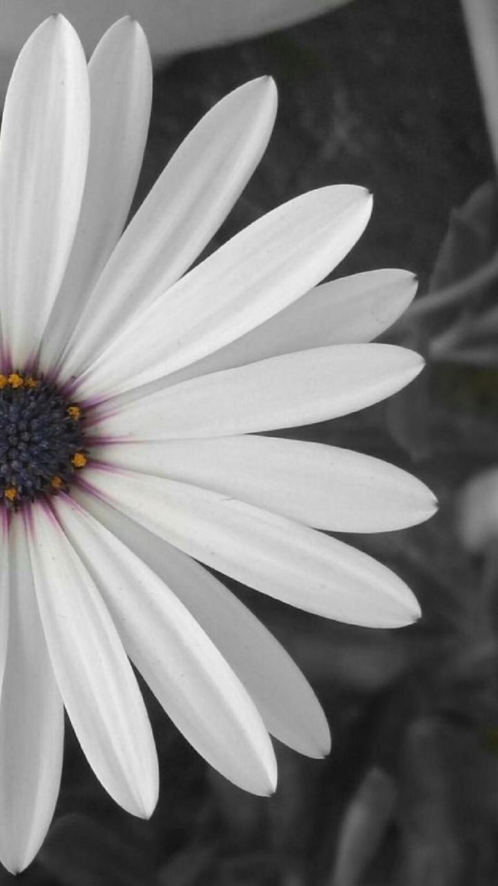 Hinh nen hoa cuc dep%2B%25289%2529