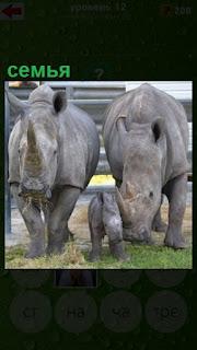 на улице на поляне идут семья носорогов с детенышем