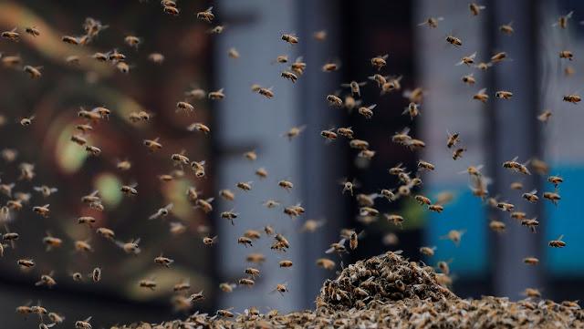 Mueren tres perros tras ser atacados por un enjambre de abejas en EE.UU.