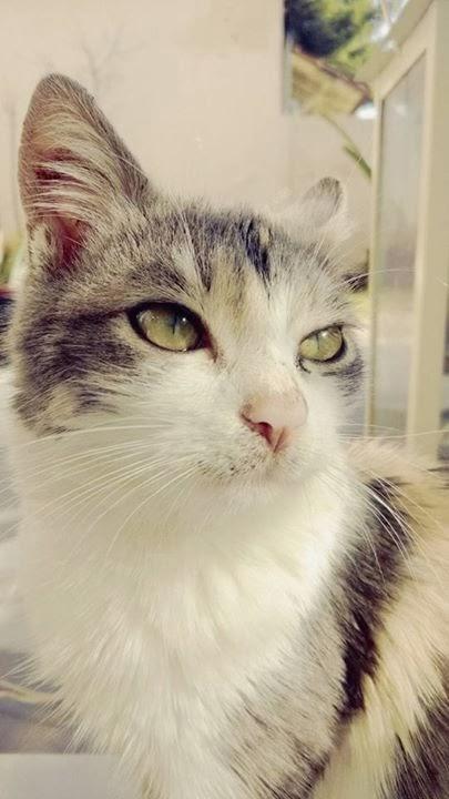872c3b035997 Διατροφή και συμβουλές για γάτες Είδη διατροφής  1. Μαγειρευτή τροφή. 2.  Έτοιμη τροφή σε κονσέρβα ή σε ξηρή μορφή .