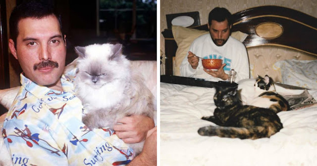 20 Adorable Pictures Of Freddie Mercury And His Cats