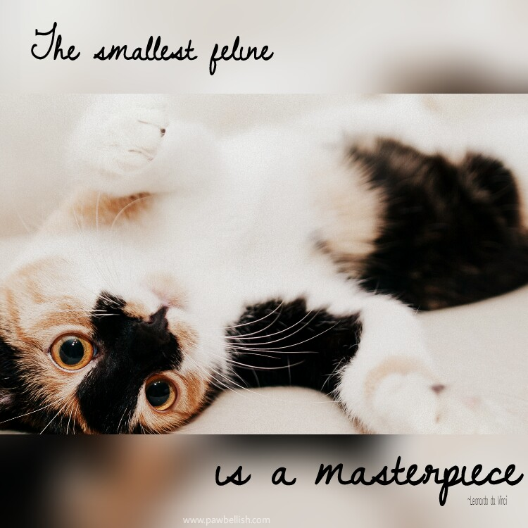 The smallest feline is a masterpiece.  Quoted by Leonardo da Vinci