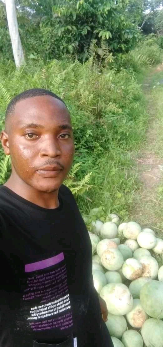 Let's not depend on the north, our land is fertile— young man harvest over 500 water Melons from is garden in Bayelsa state.