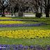 VIANA | A Primavera chegou
