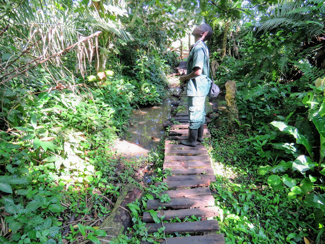 Rogers on the trail at Bigodi Wetlands in Western Uganda