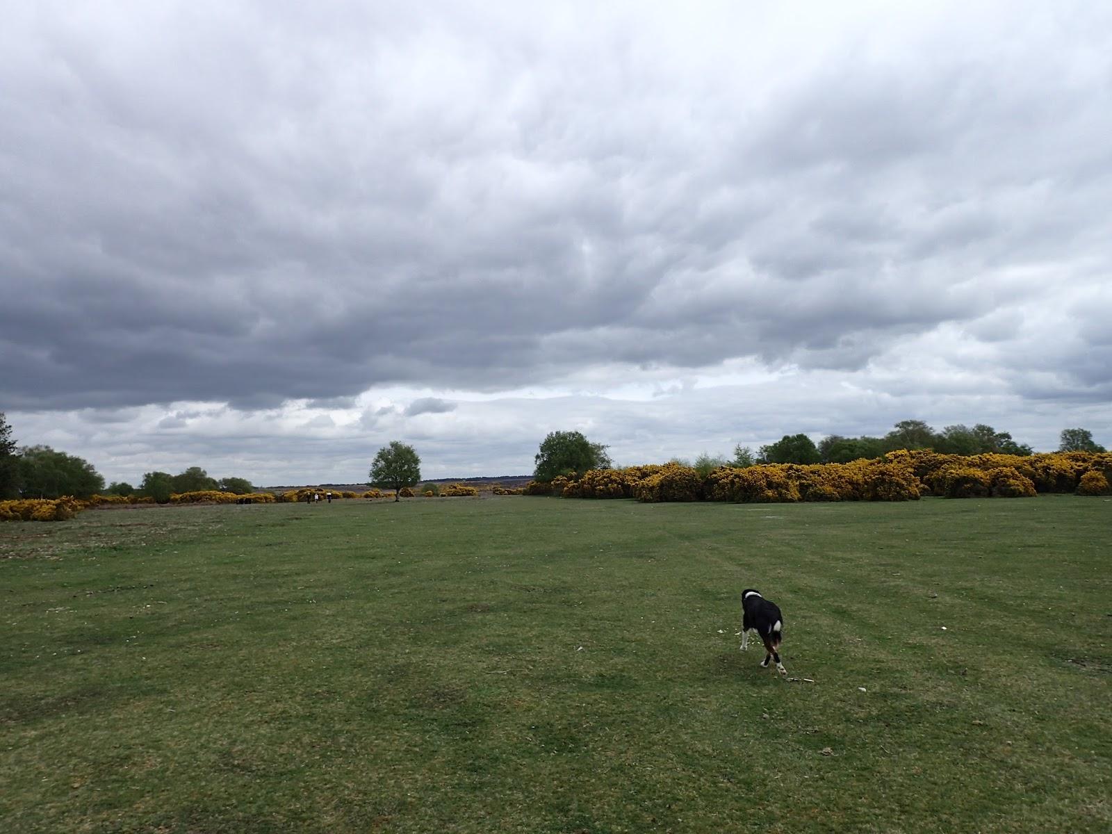 Badbury Rings Circular Walk