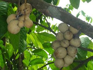 Tumbuhan Berbiji(Spermatophyta)