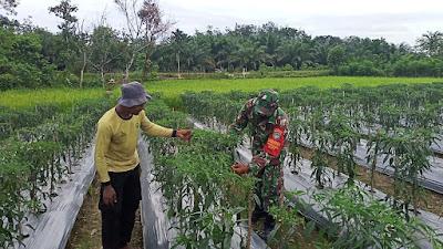 Di Tengah Pandemi, Babinsa Posramil 05/PC Terus Aktif Tinggkatkan Ekonomi Petani