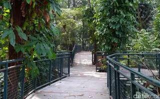Taman Hutan Babakan Siliwangi.