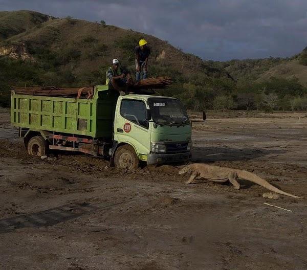 Mardani: Biarkanlah Pulau Komodo Tetap Liar