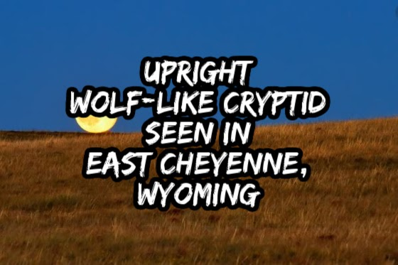 Upright Wolf-Like Cryptid Seen In East Cheyenne, Wyoming