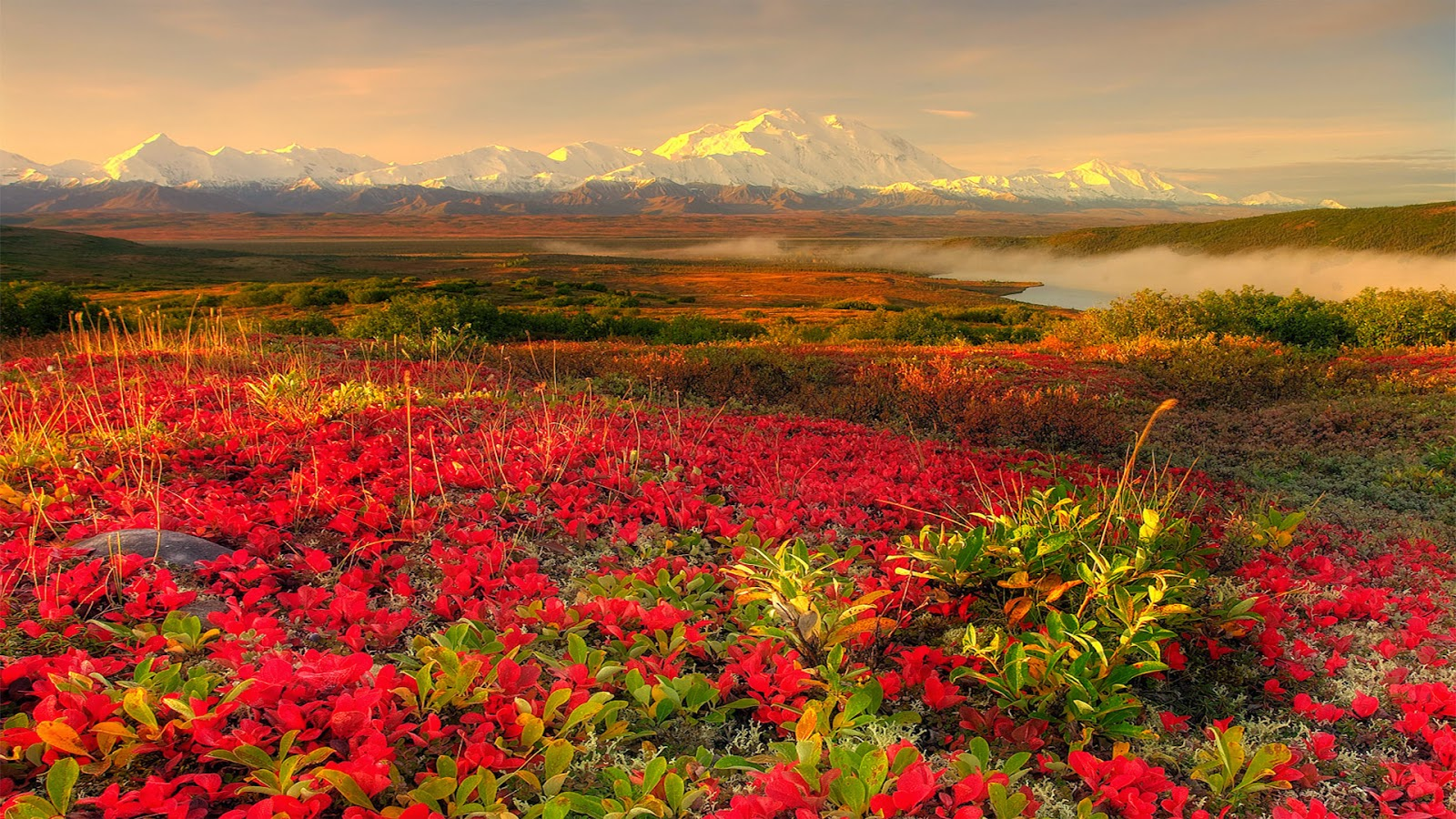 Beautiful Flower Garden Alaska Widescreen Wallpaper 1600 X 900 Flower Wallpaper