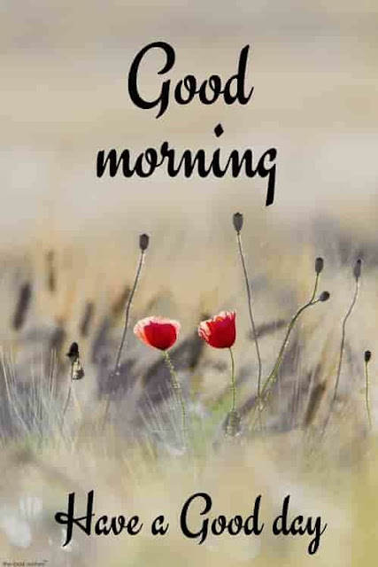 good morning images 2019