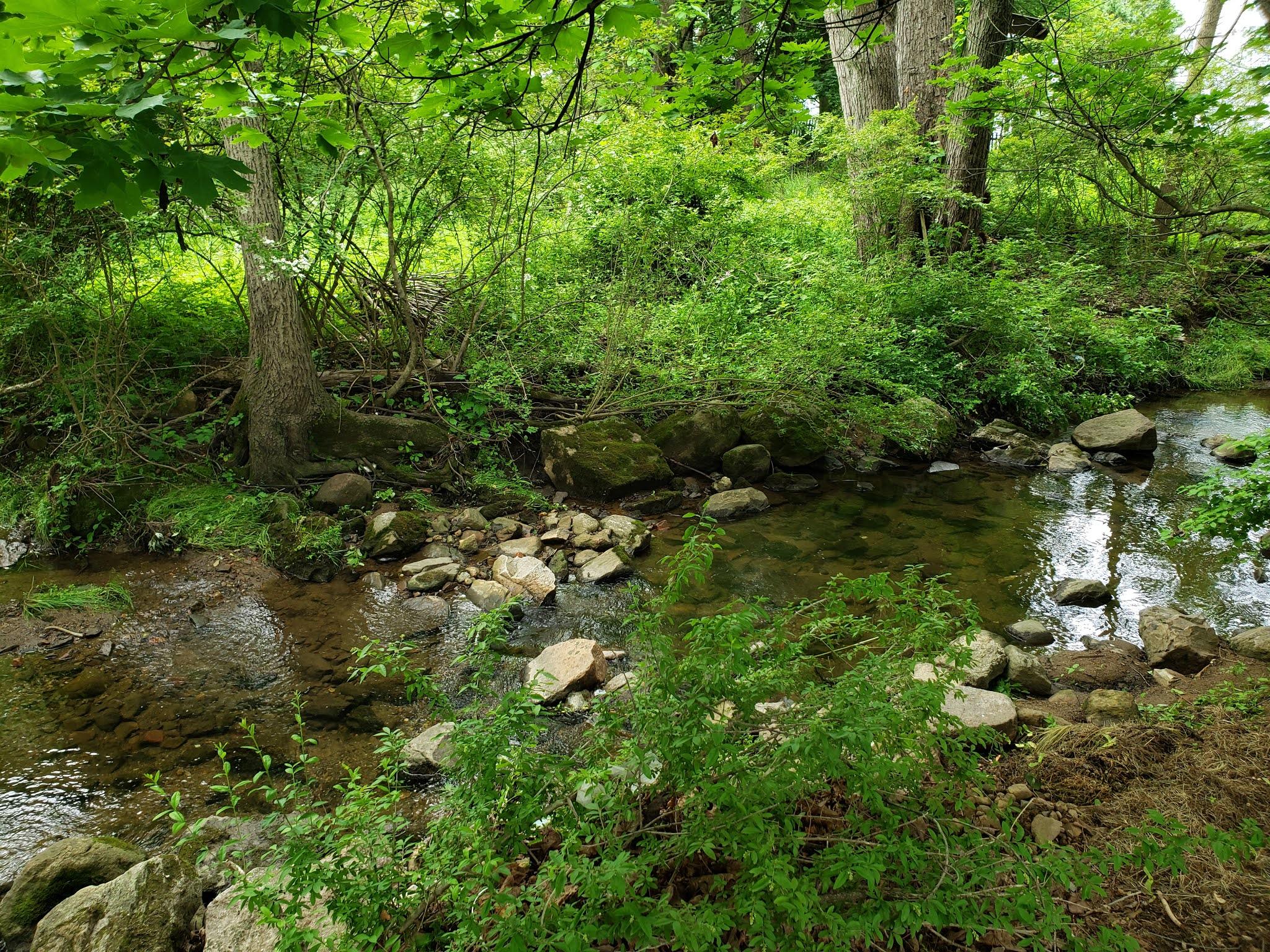 Shabbacong Creek, Shabbacong Mountain Preserve, Washington Borough, Warren County NJ