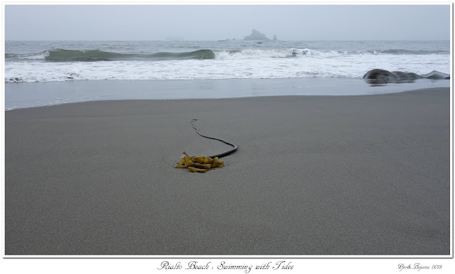 Rialto Beach: Swimming with Tides