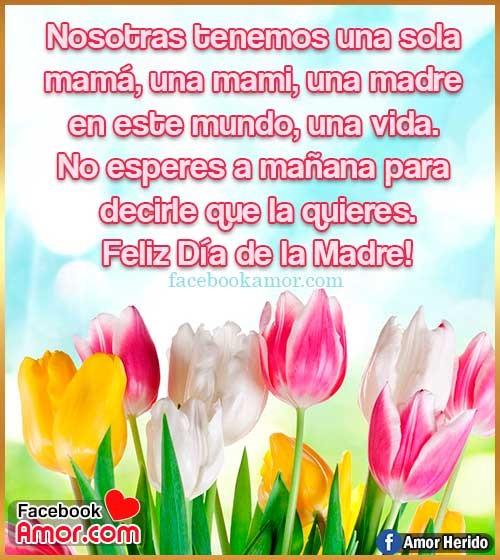 flores tulipanes para mamá