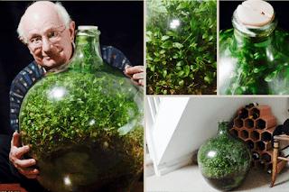 Un micro-écosystème vieux de 40 ans
