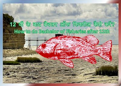 How to do Bachelor of Fisheries after 12th | 12 वीं के बाद बैचलर ऑफ फिशरीज कैसे करें?