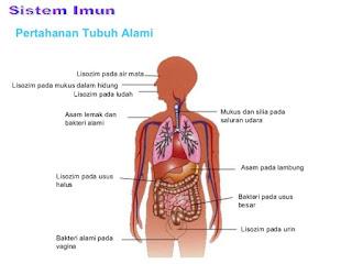 Sistem Imun pada Manusia - berbagaireviews.com