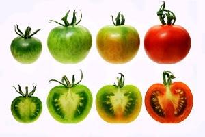 15 Efek Samping Tomat untuk Wajah yang wajib Diketahui