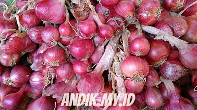 bawang merah, bawang putih, bawang bombay, manfaat bawang merah, khasiat bawang merah, kandungan bawang merah, gizi bawang merah, nutrisi bawang merah,