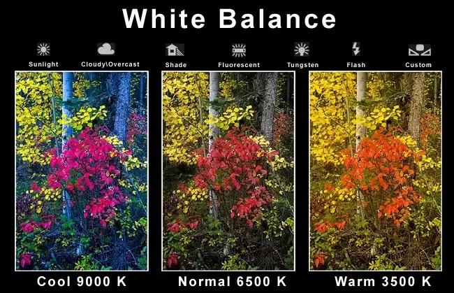Fungsi White Balance dalam Fotografi