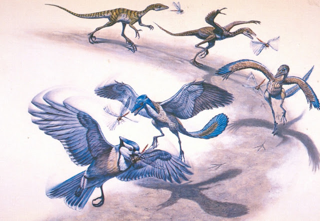 Dino-killing asteroid's impact on bird evolution