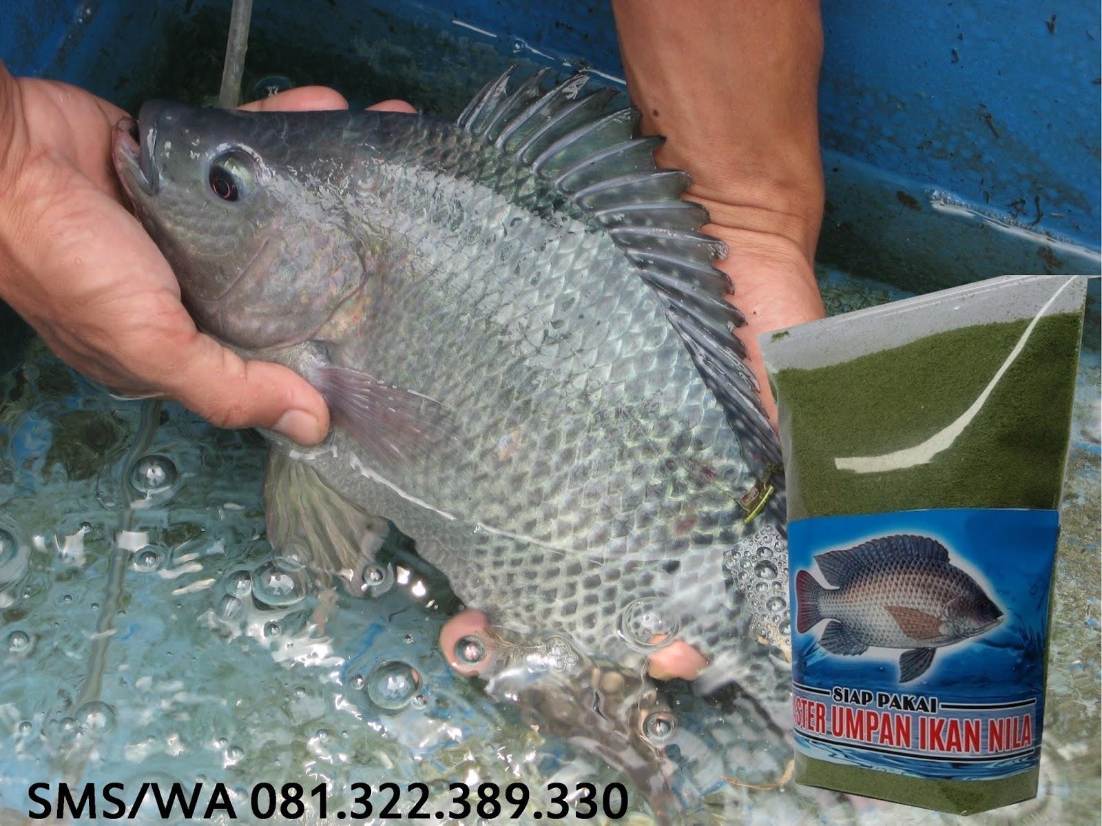 Toko Umpan Master Essen 100 Asli Original Umpan Pelet Ikan Nila Indukan