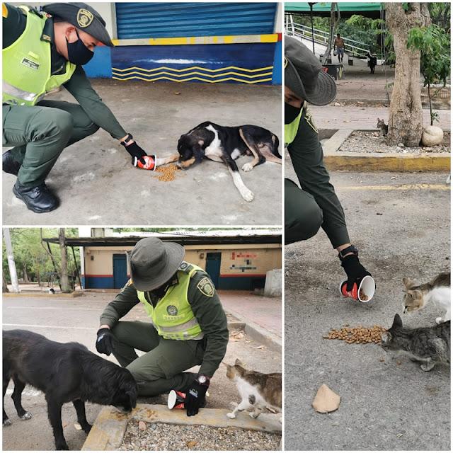 Policía Cesar brinda ayuda a perros y gatos callejeros
