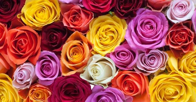 Patrimonio Nacional presupuesta una partida de 114.048 en arreglos florales para decoración de la Casa Real