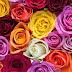 Patrimonio Nacional presupuesta una partida de 114.048 euros en arreglos florales para decoración de la Casa Real