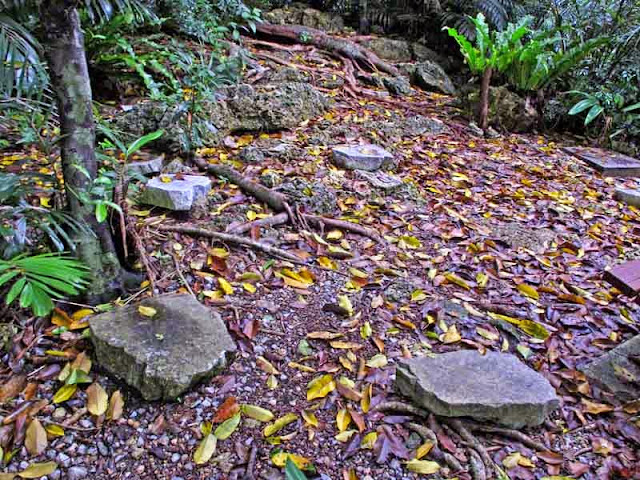 stone steps, trail, woods, fallen leaves