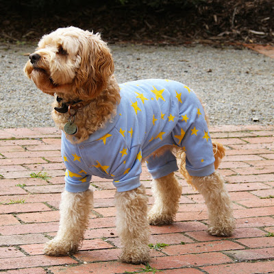 Dog wears dog pyjamas in pale blue with yellow stars standing on pavers