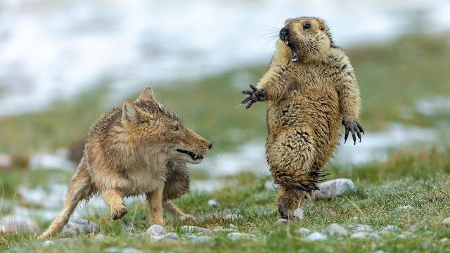 191015090207-18-national-wildlife-photographer-of-the-year-2019.jpg