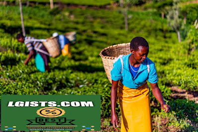 West African agricultural sector