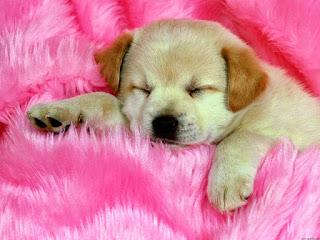 semana colorida cachorros