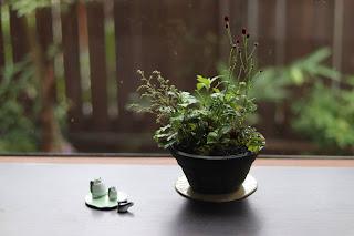 黒い焼き締め鉢に入ったヤクシマワレモコウとヒトツバショウマの咲いた山野草盆栽とカエルの置物