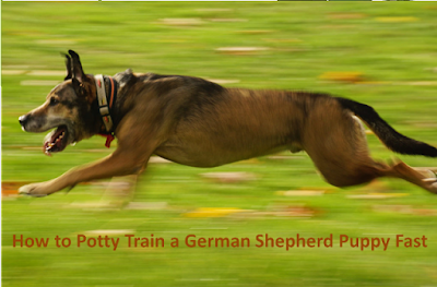 How to Potty Train a German Shepherd Puppy Fast