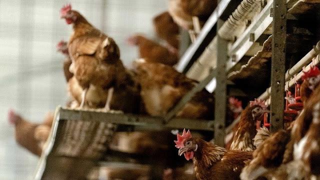 Καταγράφηκε στη Ρωσία το πρώτο κρούσμα παγκοσμίως μόλυνσης ανθρώπου με την γρίπη πτηνών AH5N8
