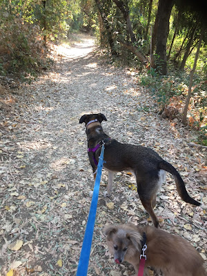 Two dogs on a tree-shaded trail