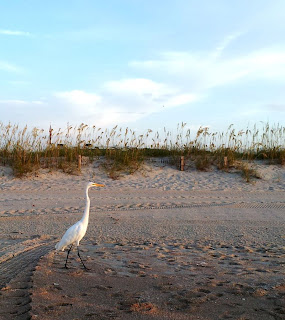 Focus on Life: Week 32 ~ From where I stand: Myrtle Beach, SC vacation... sunrise at the ocean with white heron! :: All Pretty Things