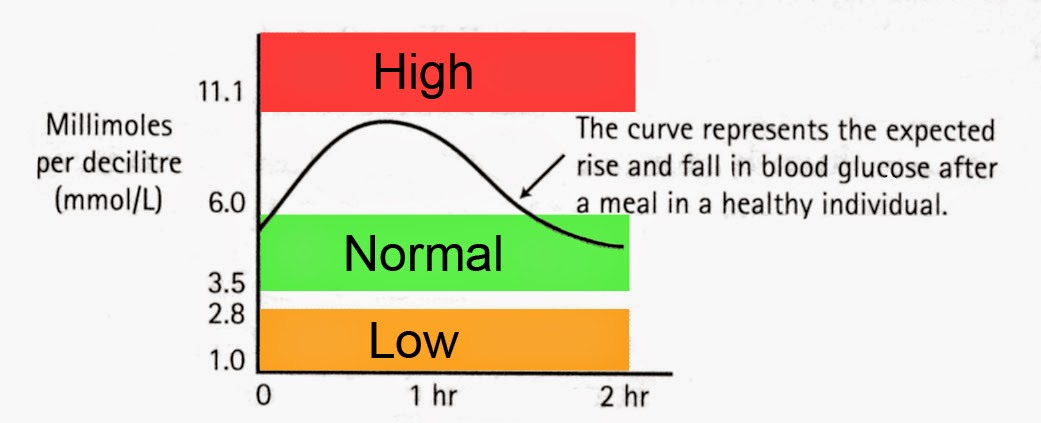 Adult blood glucose level normal