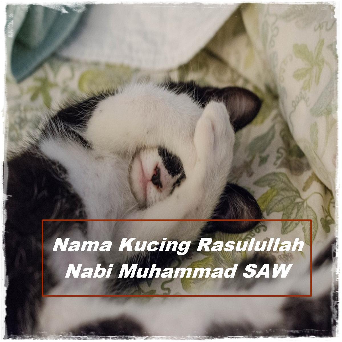 Nama Kucing Rasulullah Nabi Muhammad SAW