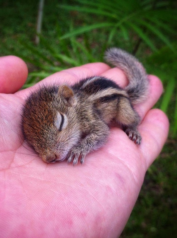Baby Palm Squirrel Rescued By Wildlife Filmmaker 7