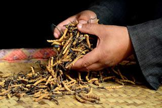 Ο μύκητας Yarsagumba το «Βιάγκρα των Ιμαλαΐων»