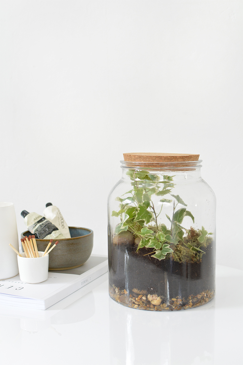 how to make a terrarium in a jar.