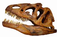 Resultado de imagen para craneos dinosaurios