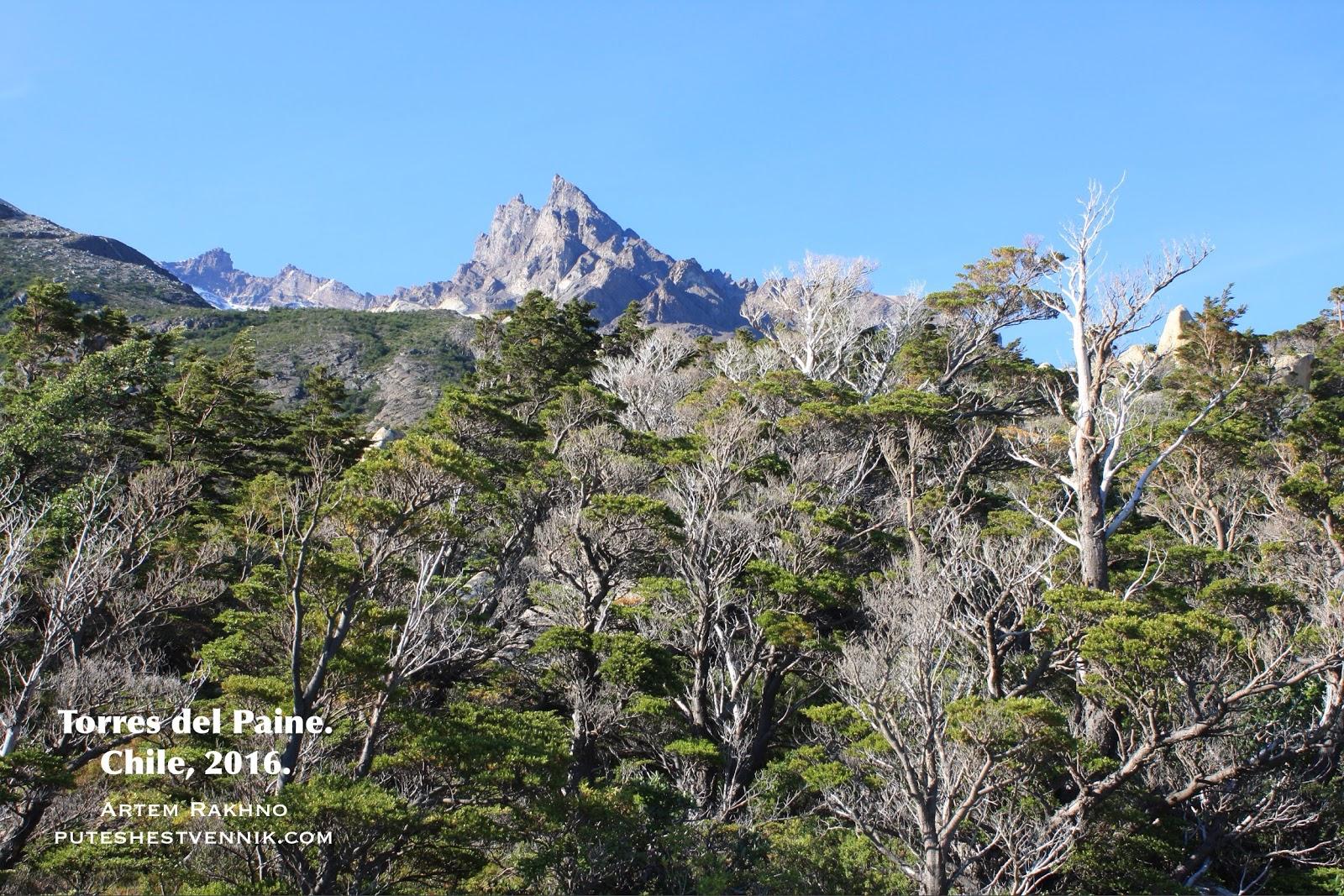 Лес и гора в Торрес-дель-Пайне